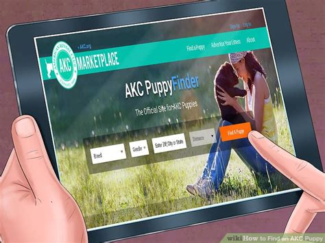 akc puppy finder 3 ways to find an akc puppy wikihow
