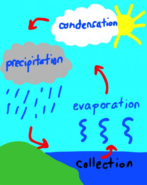 diagram to show evaporation evaporation model search water cycle