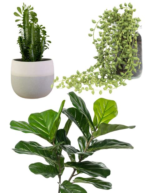 indoor plants nz trend report dark wood indoor plants and light terrazzo