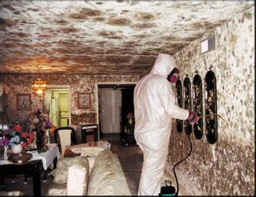 mold in the house remove mold from walls how to remove black mold