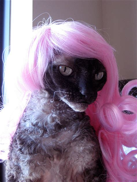 cat wig cats wig cat wigs wigs for cat wigs for cat