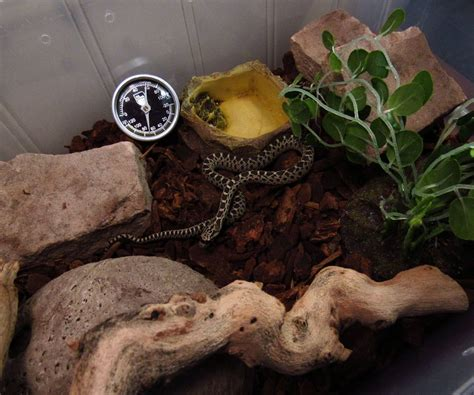 snake for bathtub snake tub