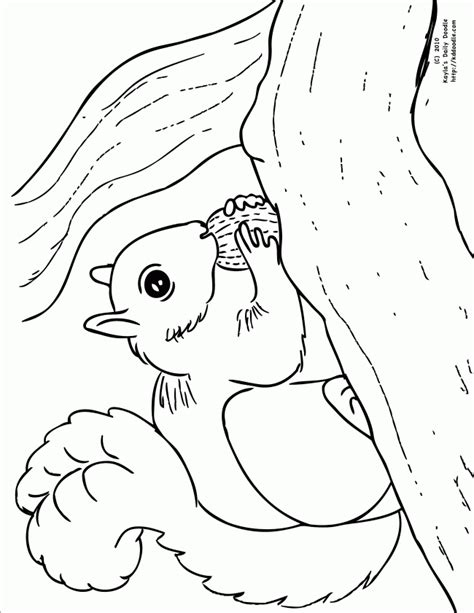 free coloring page squirrel free coloring pages of squirrel with acorn