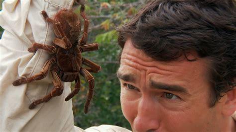 Japanese Home Design Tv Show by Goliath Bird Eating Spider Weneedfun