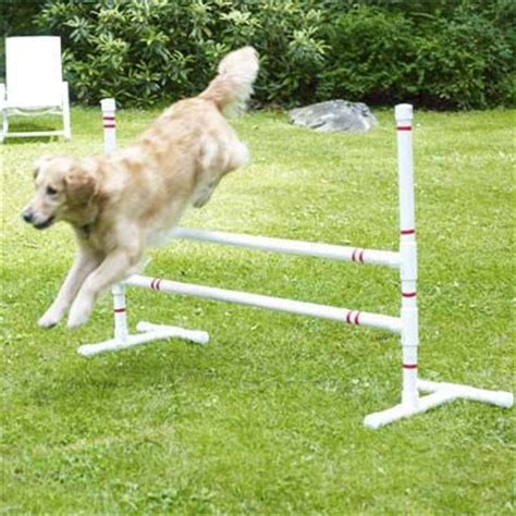 diy agility course how to build a pet agility course