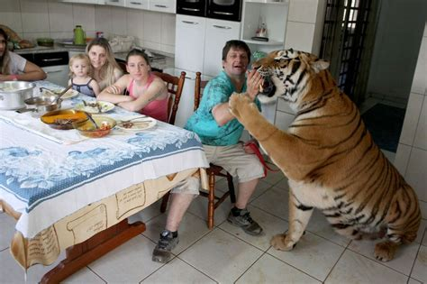 tiger as a pet animal stories