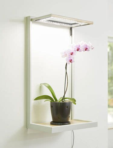 led grow lights for orchids 15 best grow lights images on indoor