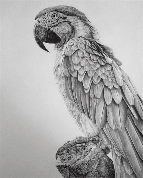 dibujos a lapiz increibles pencil drawings by an artist who is addicted to detail