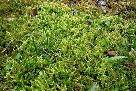 Was Machen Gegen Pilze Im Garten by Moosextrakt Als Pflanzenschutz Gegen Krankheiten Und Schnecken