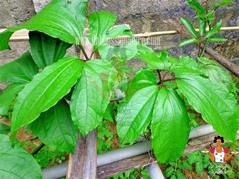 nigerian indigenous herbs dobbys signature nigerian food blog i nigerian food