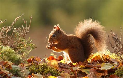 animal seasons squirrels autumn 1848358784 17 meilleures images 224 propos de automne sur potirons nature et feuilles d automne