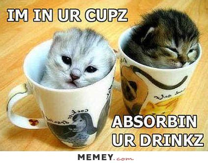 Cool Coffee Mugs For Guys by Kitten Memes Funny Kitten Pictures Memey Com