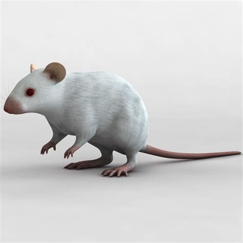 3d Modeling Mouse