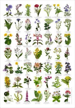 natur poster mit pflanzen und tieren im kinderpostershop