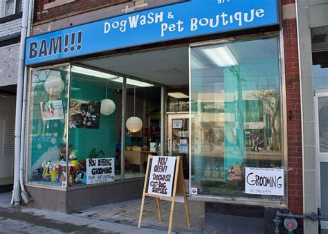 puppy boutique near me bam dogwash pet boutique toronto business story