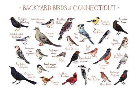 connecticut backyard birds field guide art print kate
