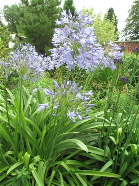 winsford walled garden winsford walled garden halwill anmeldelser