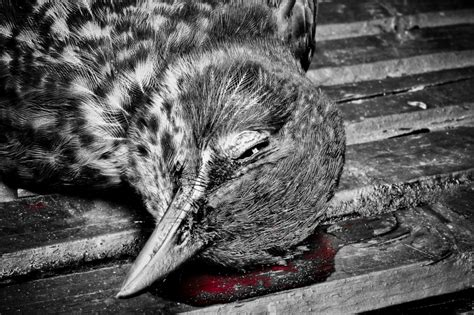 dead bird in backyard meaning dead bird symbolism london photographer pictures from london and the world