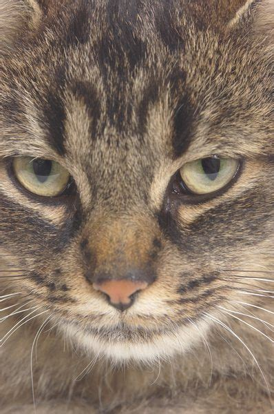 suddenly aggressive sudden unexplained aggression in cats pets