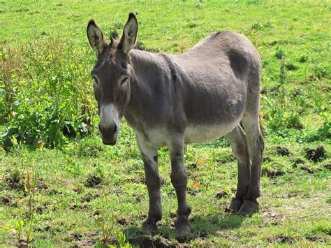 burro animal free pictures 8 images found