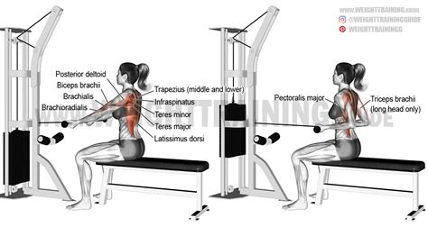 seated cable row back seated underhand cable row exercise