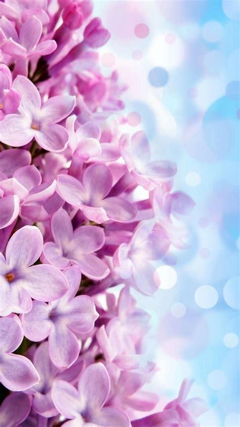 iphone wallpaper flowers iphone wallpapers iphone wallpaper hd purple flowers 2018 cute screensavers