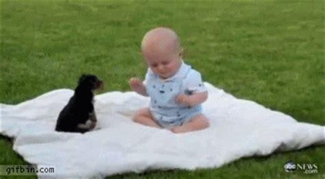 puppy monkey baby gif puppy vs baby best gifs updated daily