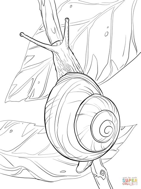 garden snail coloring page white lipped snail coloring page free printable coloring