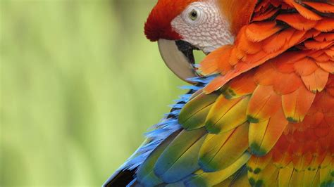 wallpapers macaw bird wallpapers parrot wallpapers wallpaper cave