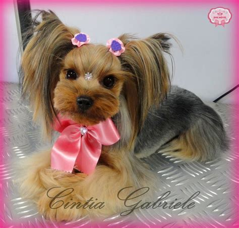yorkie puppy grooming styles best 25 terrier haircut ideas on