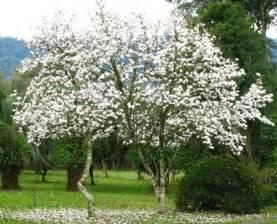conselhos para ter um jardim f 233 rtil flores cultura mix