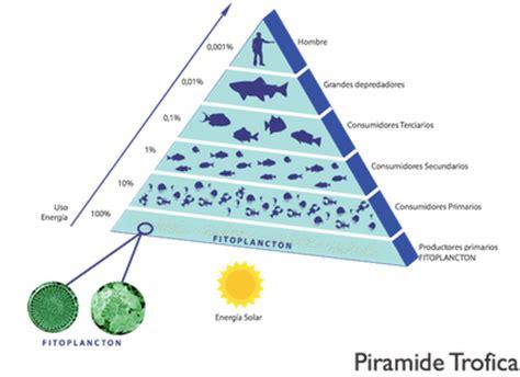 201 tica y entorno 2015 - Cadena Alimenticia Pirámide Trofica