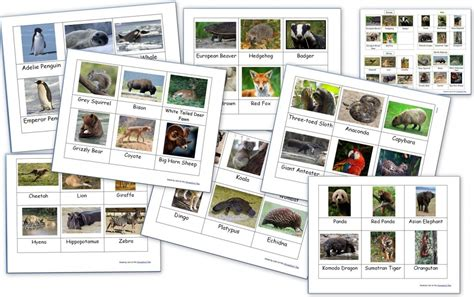 printable montessori cards animals and their groups sorting cards ages 5 8