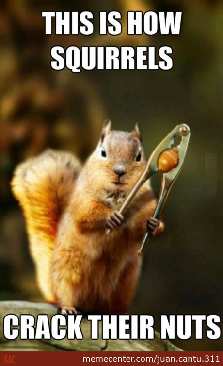 Squirrel Nuts Meme - how squirrels crack nuts by recyclebin meme center
