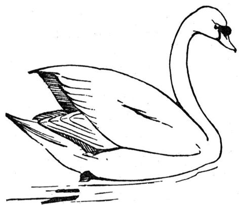swan coloring pages free swan coloring pages