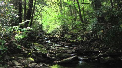 deep woods 11 hours sounds of nature 25 of 59 pure