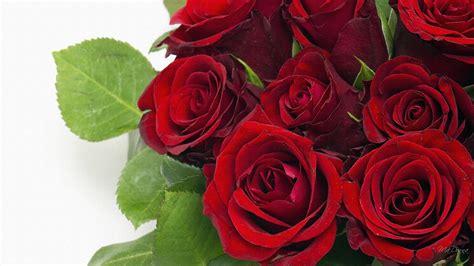 california flower mall opens  poll  long stemmed