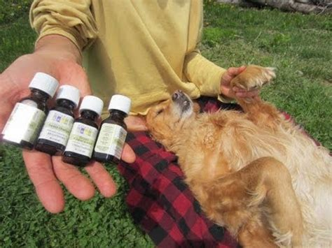 tick repellent for dogs how to remove fleas from dogs grooming tips doovi