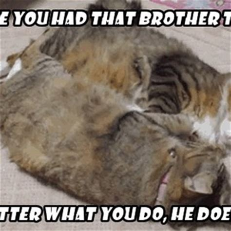 Copy Cat Meme - copy cat brother by ifreet meme center