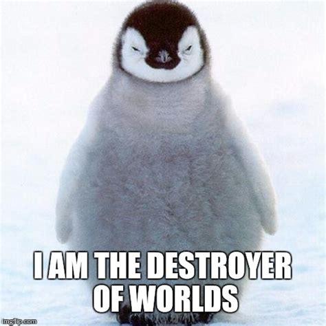 Meme Generator Penguin - evil eyed baby penguin imgflip