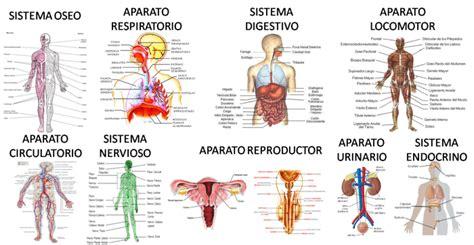 el cuerpo humano que las sistemas del cuerpo humano y sus funciones vitales
