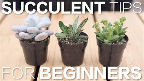 succulent tips  beginners garden answer youtube