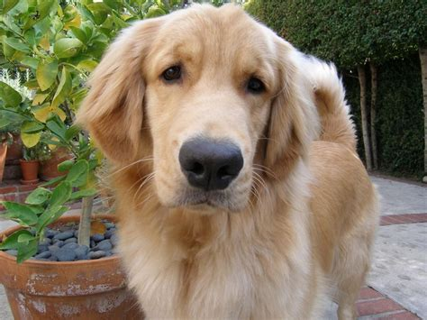 pärchen bettdecke de 8198 b 228 sta dogs bilderna p 229 animales
