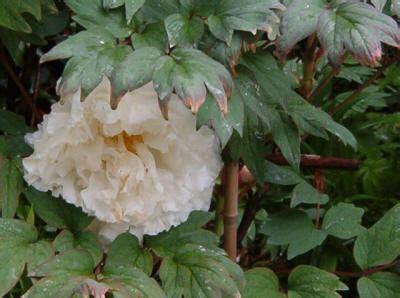 professione giardiniere http www adhikara capriasca foto im000848 jpg