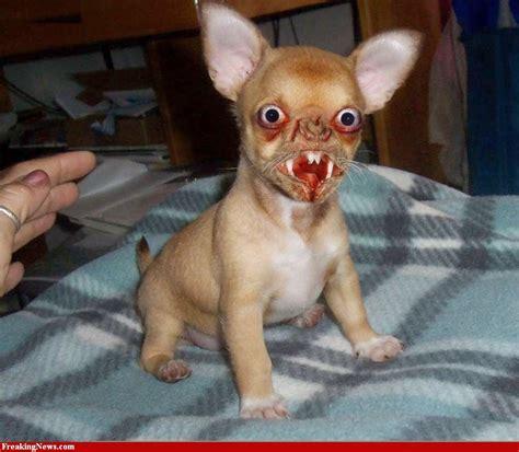 imagenes de animales raros y feos imagenes de perros feos los bobotes