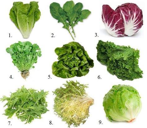 lettuce types and names www pixshark com images