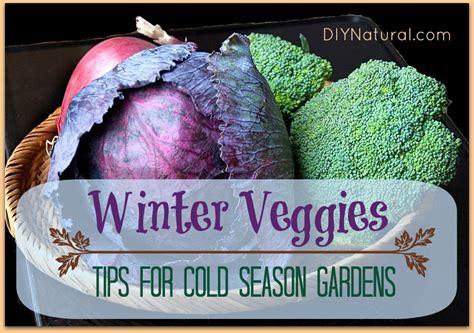 growing a winter garden winter vegetables tips for a cold season garden