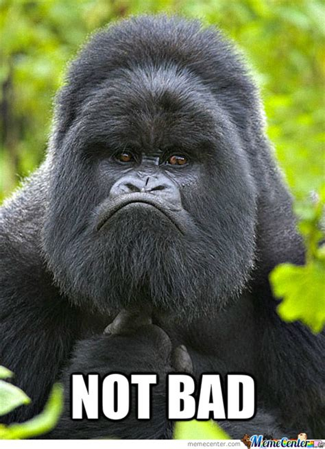 Gorilla Meme - not bad gorilla by allmustburn meme center