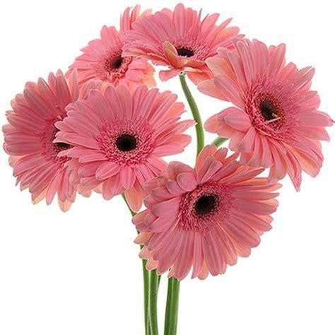 imagenes de gerberas blancas be chic personal shopper flores por san valent 237 n un