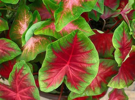 colorful shade plants colorful potted plants for shade loving containers shady